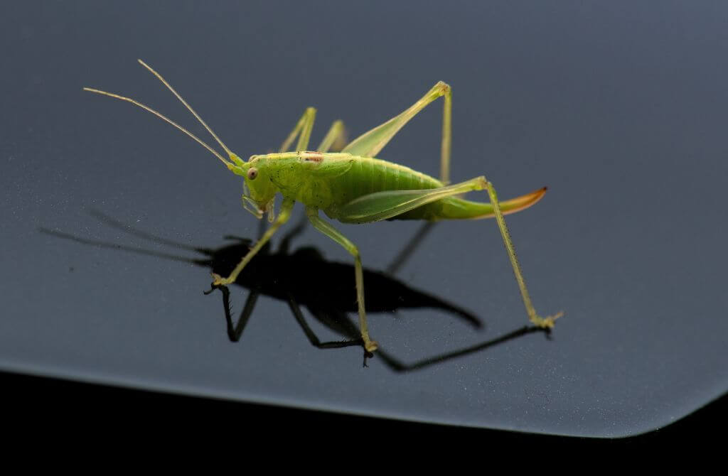 bugs can be cleaned off cars with dryer wipes