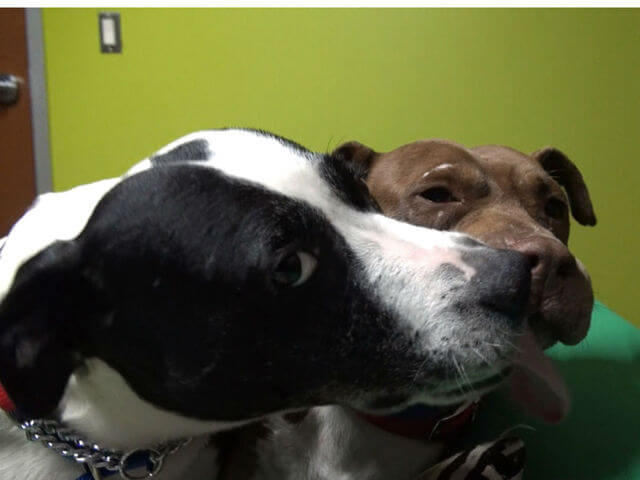 dogs-wanted-rescued-together-69686-40406.jpg
