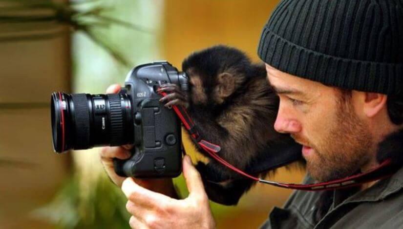 baby monkey with camera