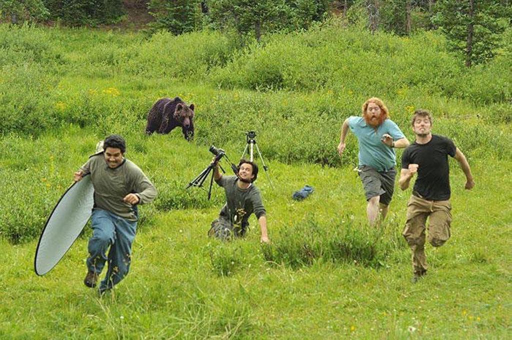 bear-running
