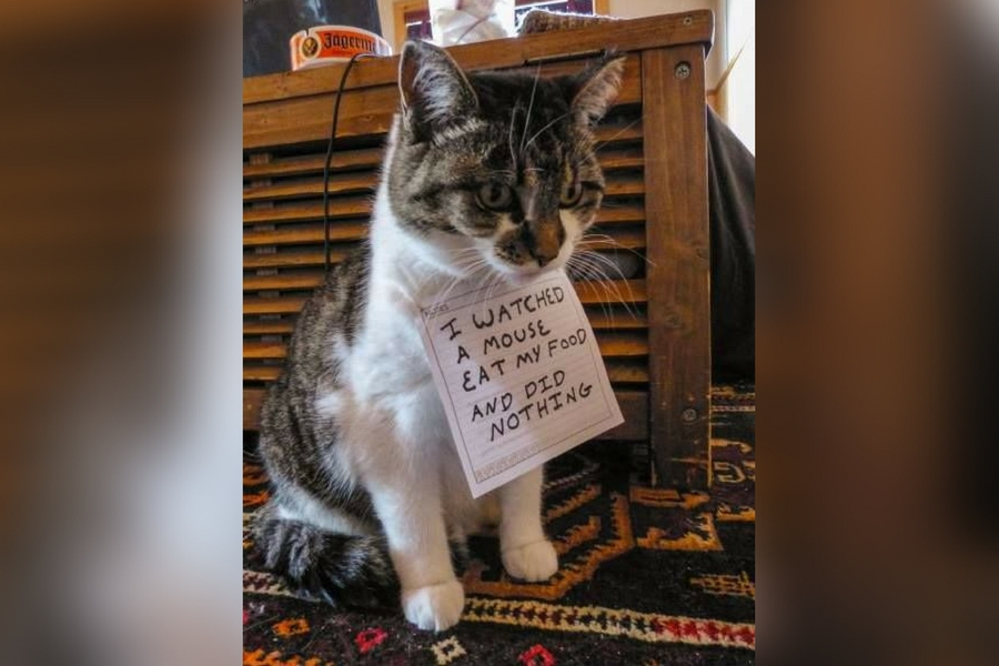 catshame4-36891.jpg