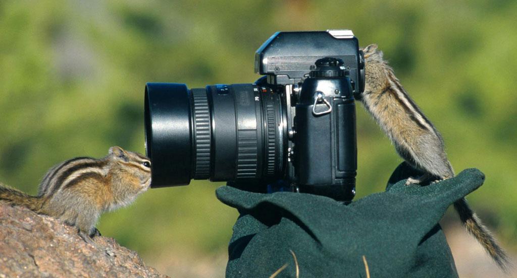 chipmunk-photography