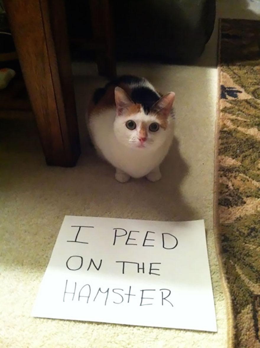 hamster-44872.jpg
