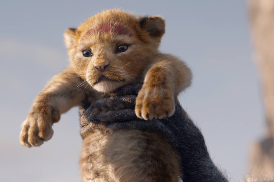 lion king live action 2019 disney