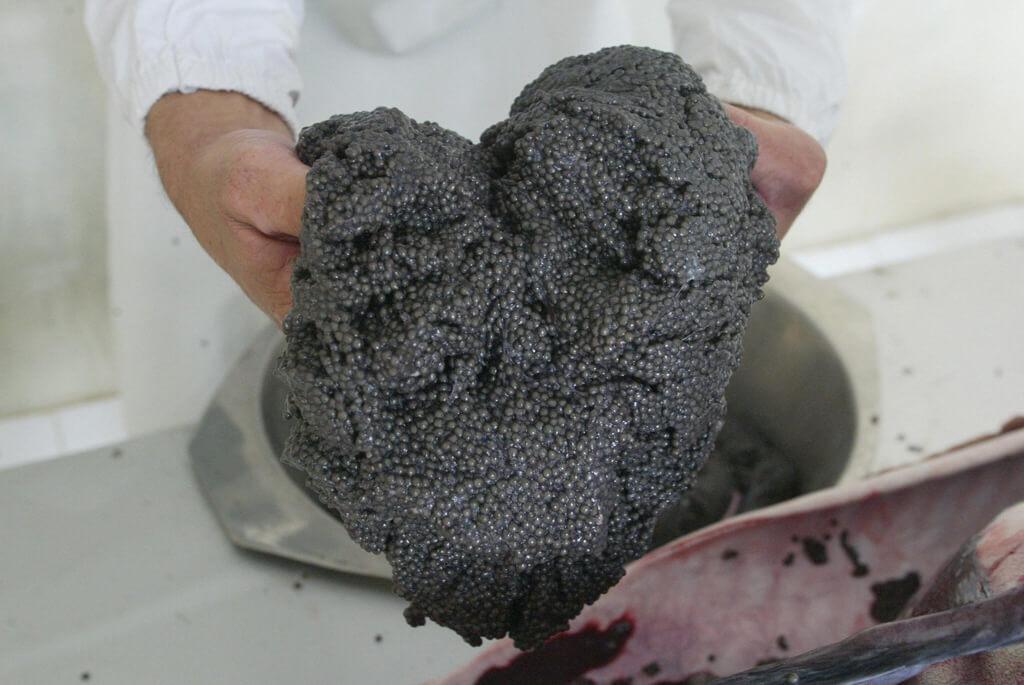 8-united-states-ban-beluga-caviar-87085-13221.jpg