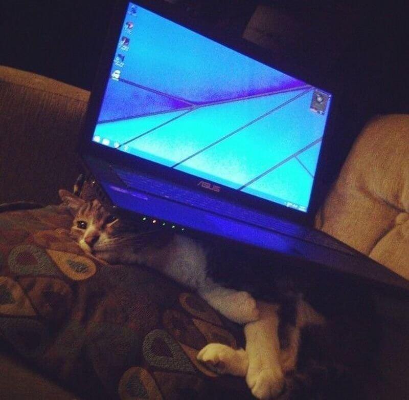 cat-asus--22648.jpg