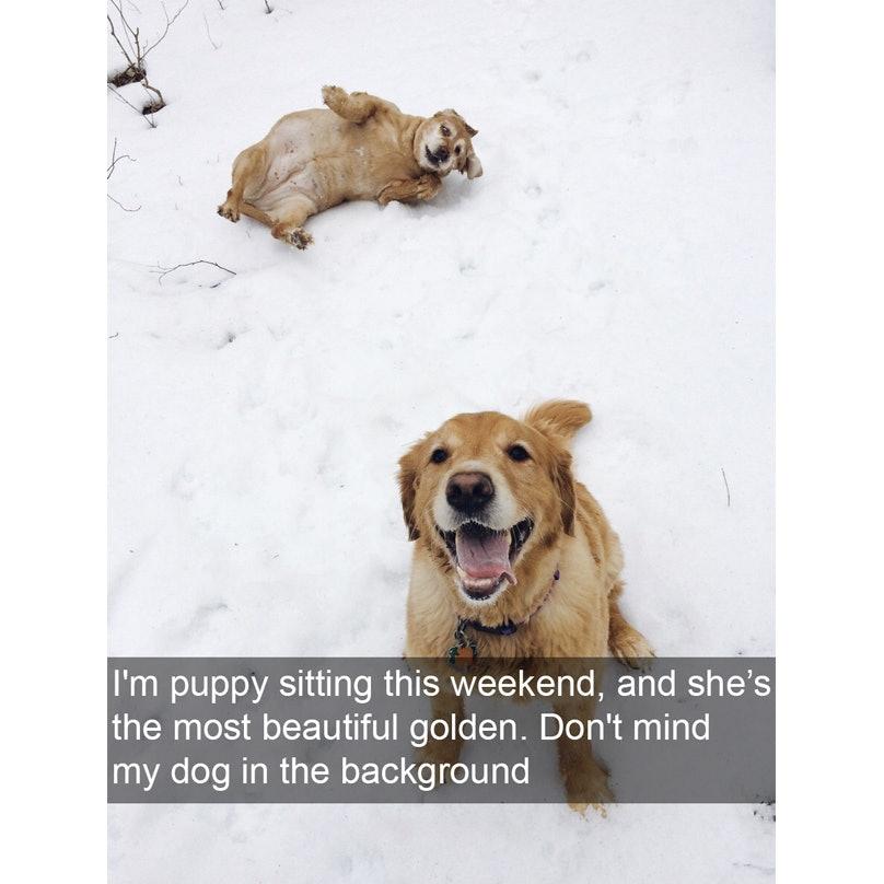 dog-jokes-resized-4-22304.jpg