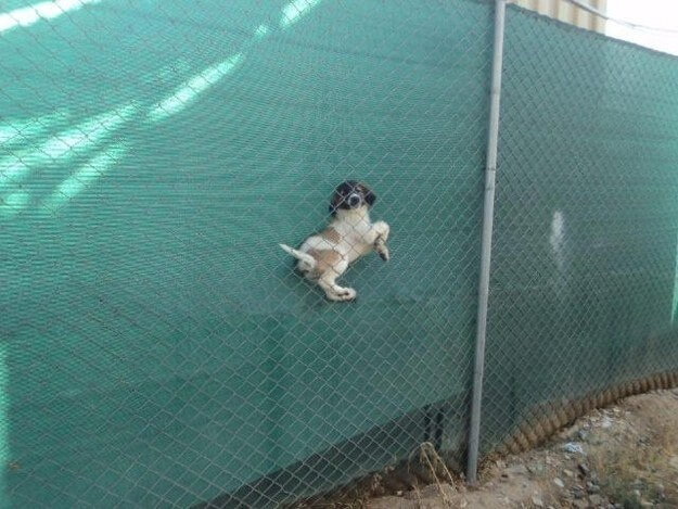 fence-puppy-fail-58680-48343.jpg