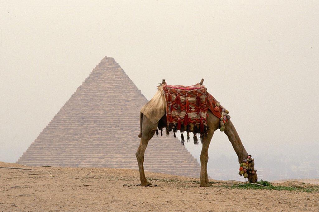 great-pyramid-camel-90345-40113.jpg