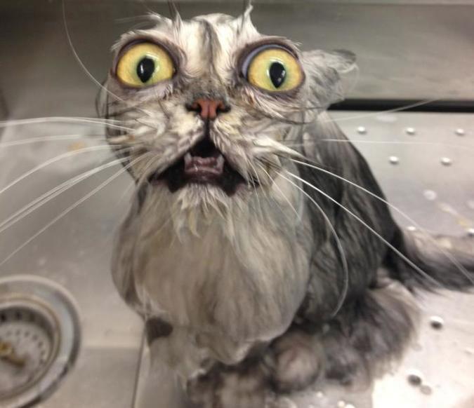 20-wet-cat.jpg