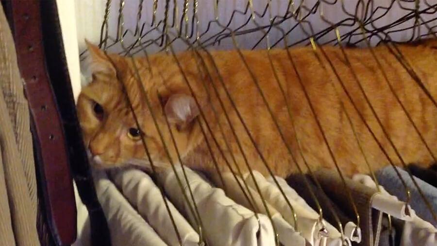 hanger-cat.jpg
