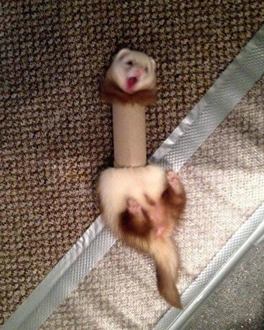 lol-lol-animals-60583.jpg