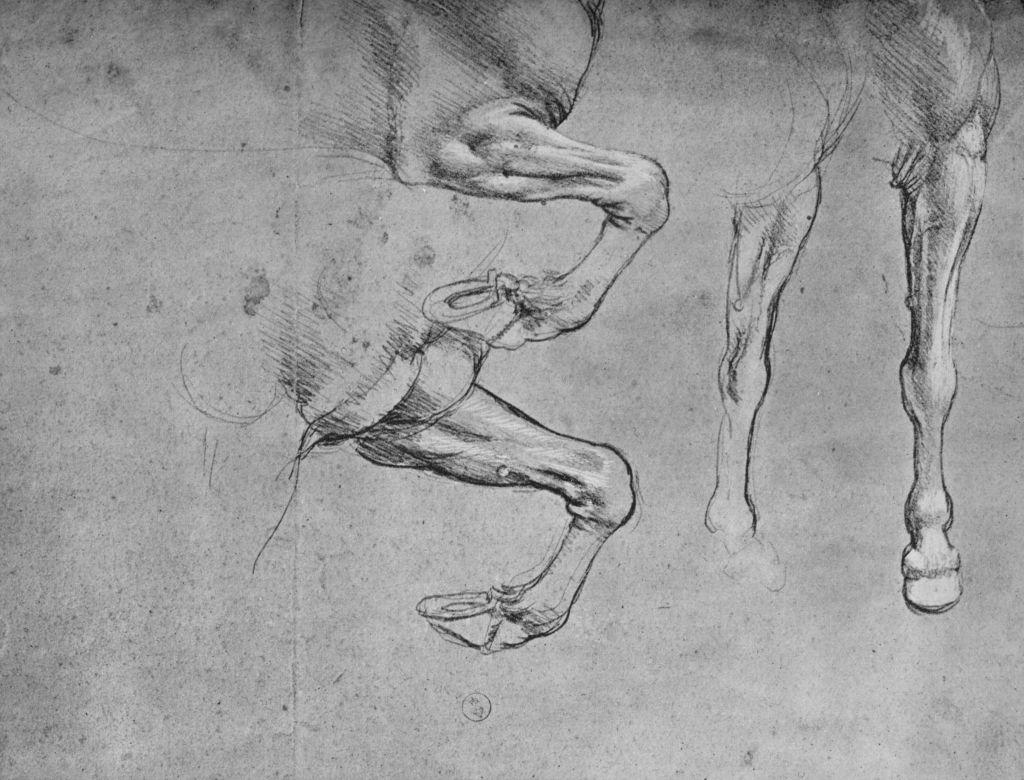 Four Studies of Horses' Legs', c1480 (1945). From The Drawings of Leonardo da Vinci.