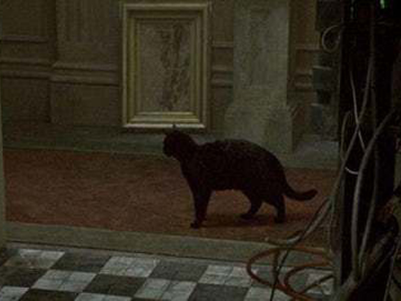 same black cat was used in two matrix movies