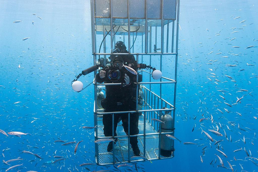 Shark Cage -611542962