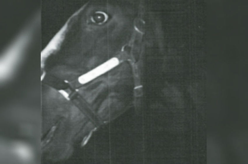 shergar polaroid black and white