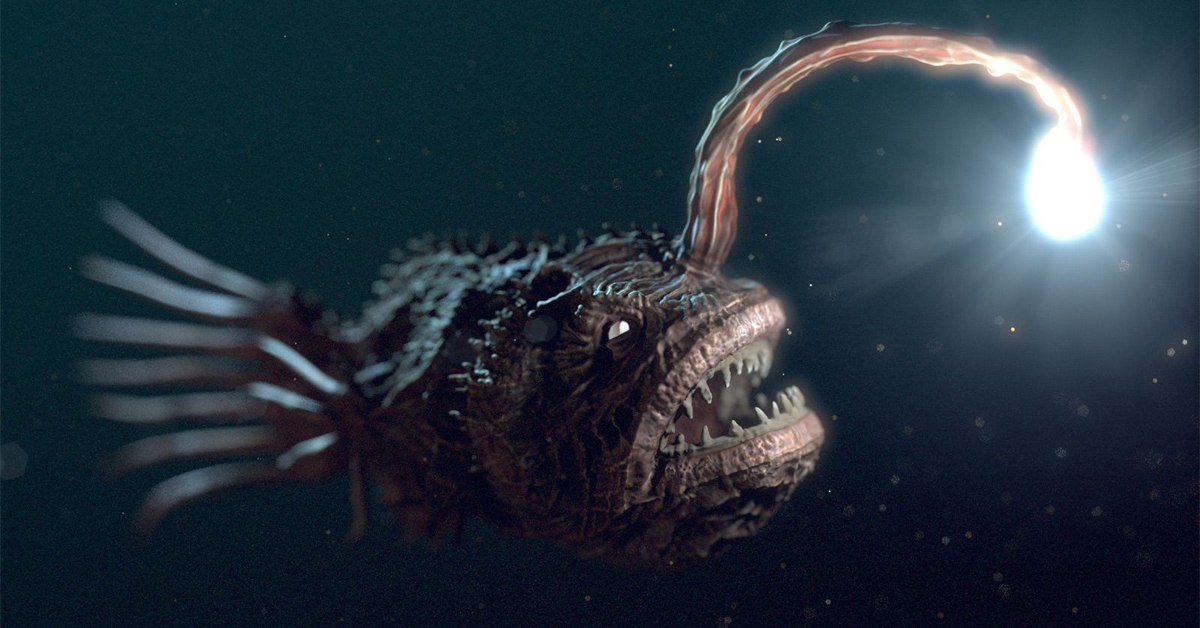angler fish with sharp teeth and light antenna swimming in the ocean