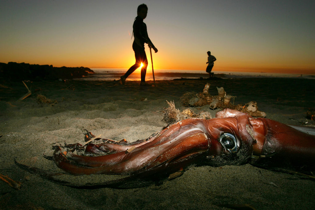 giant squid that washed ashore onto a beach