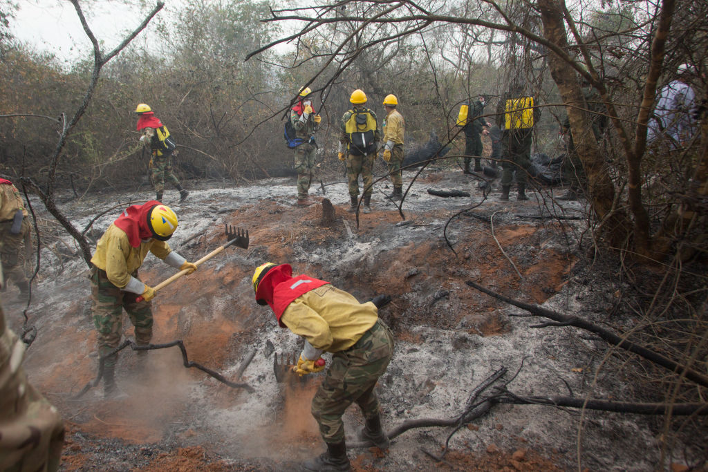 The Bolivian fire department secures the burnt land in the forest by mopping up.