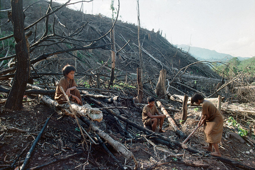 Three indigenous boys sit amongst burned trees in the forest.