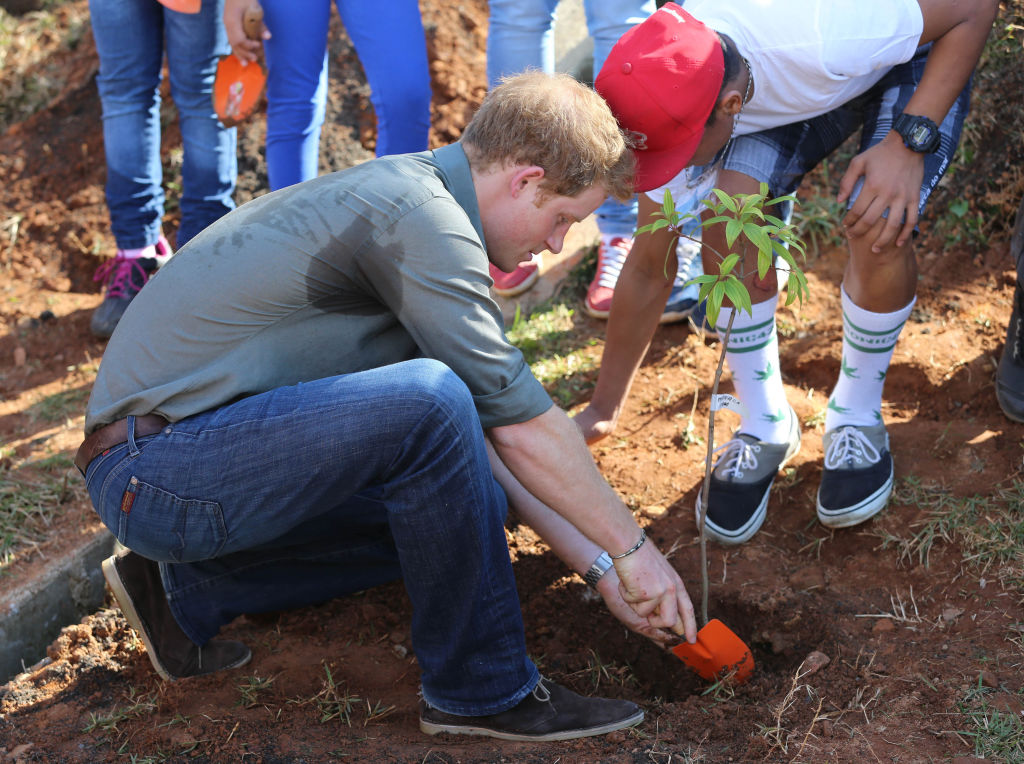 Prince Harry shoves the dirt around a small tree he's planted.