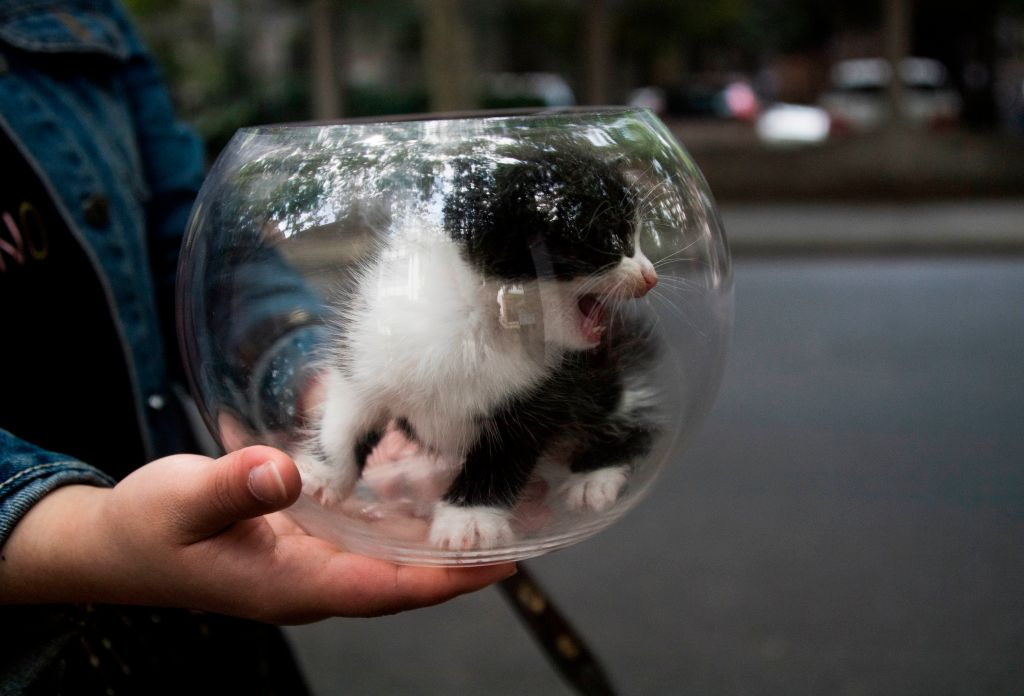 small kitten in bowl
