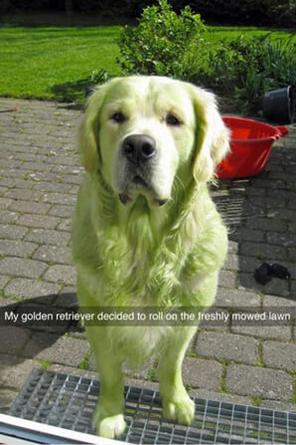 green-golden