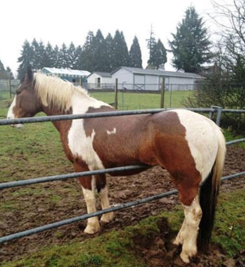 horse-fail