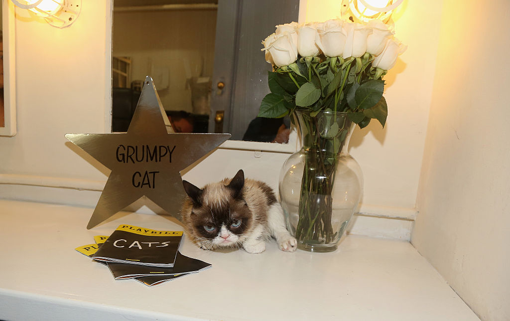 Grumpy Cat at Cats play