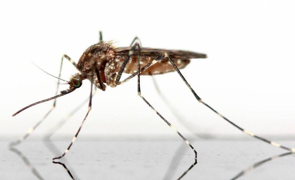 mosquito-34408-67997