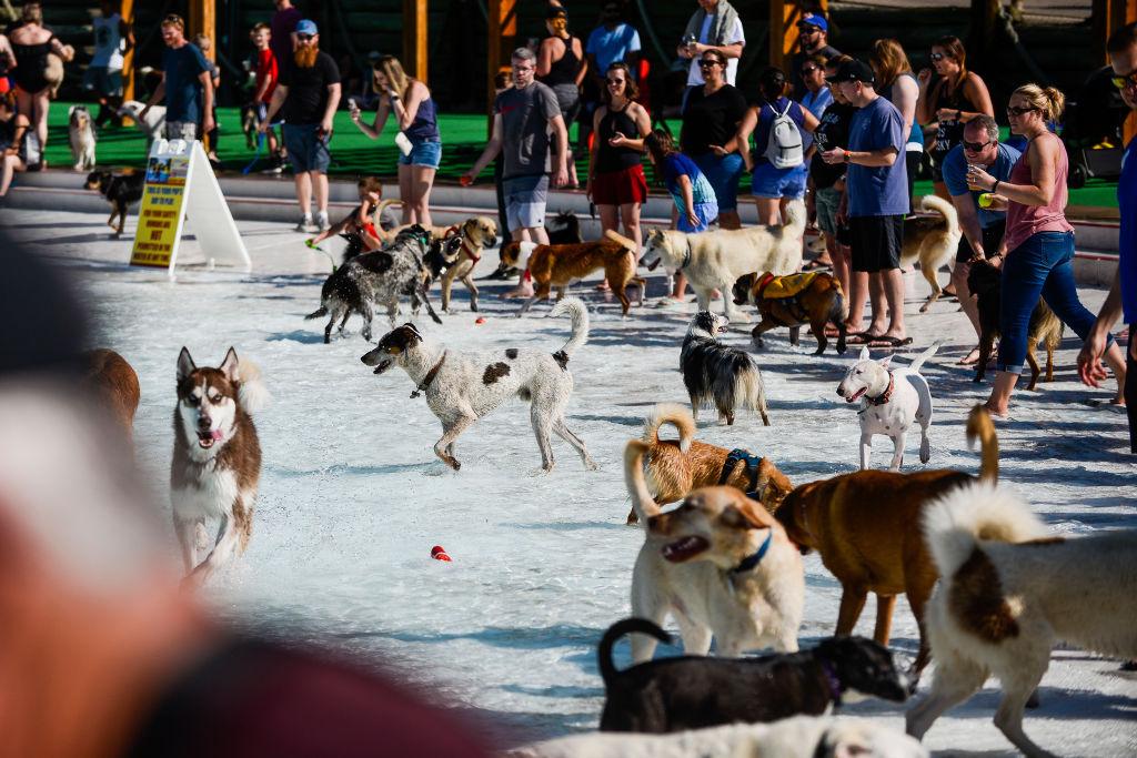 crowded dog park
