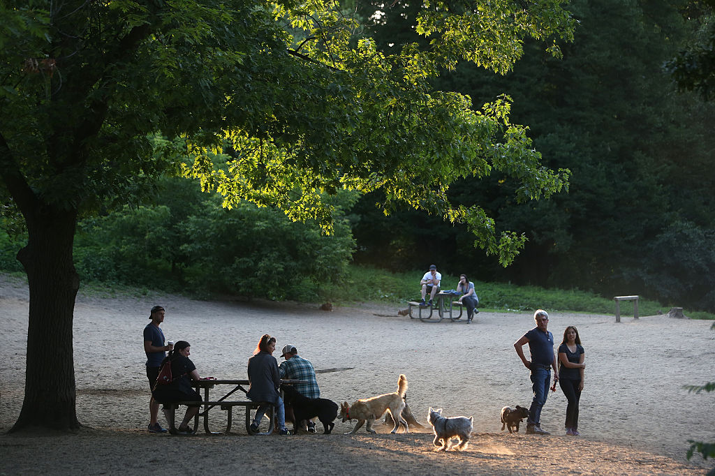 dog park scene