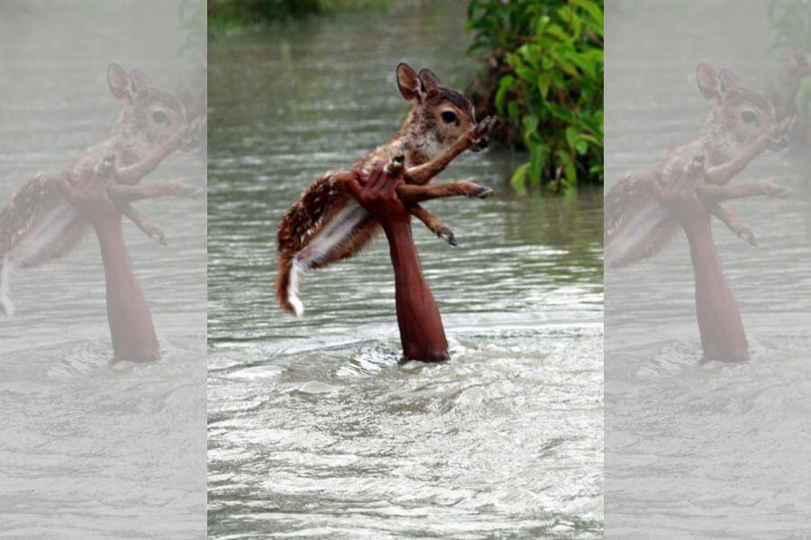 Saving-A-Deer-From-A-Flood-19467-27622