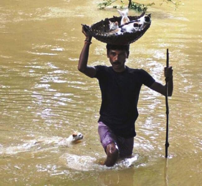 Walking-Kittens-Through-Flood-Waters-58413-95115