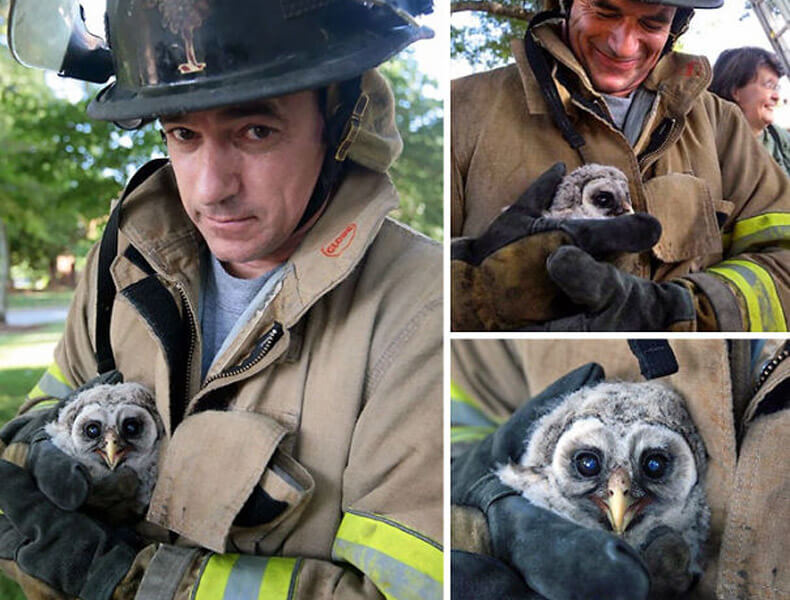 firefighters-rescuing-animals-saving-pets-12-5729aa9c8aa4b__605-17306-96436