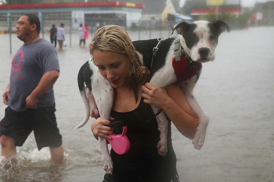 hurricane-harvey-dog-84096-57708