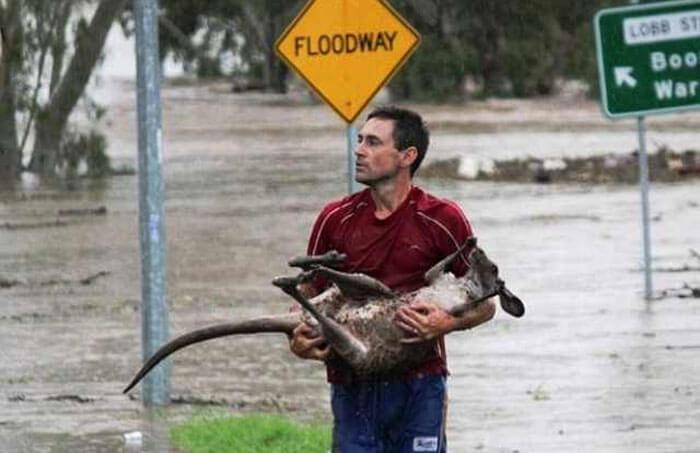 kangaroo-rescue-88372-51524