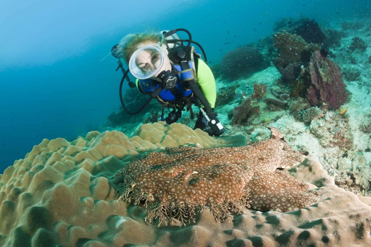 A diver finds a wobbegong shark on a reef.