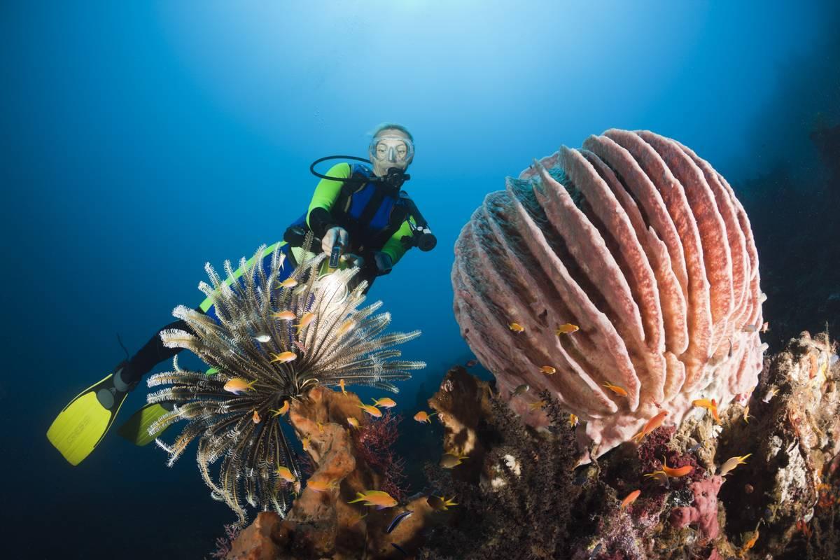 A diver explores sea sponges in Indonesia.