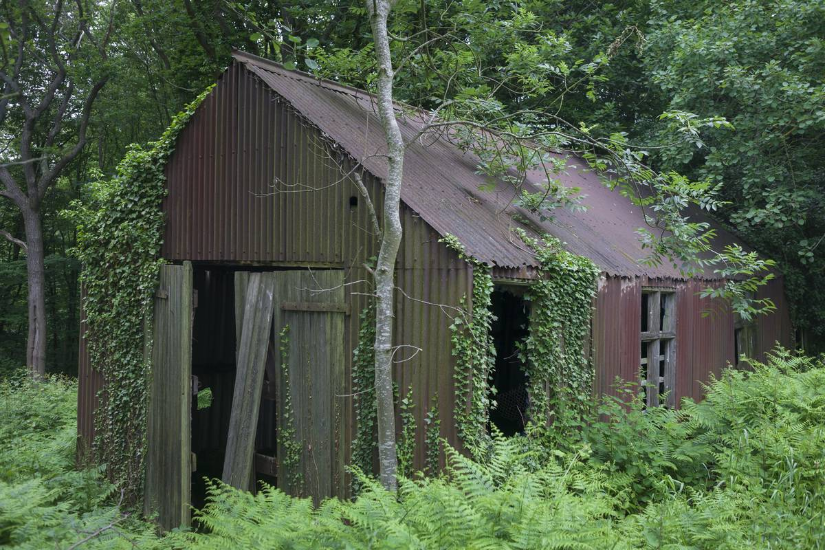 An abandoned shed is covered with vines in the forest.