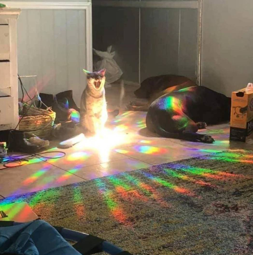 screaming cat sitting in light from a window is at center of rainbow shots of light