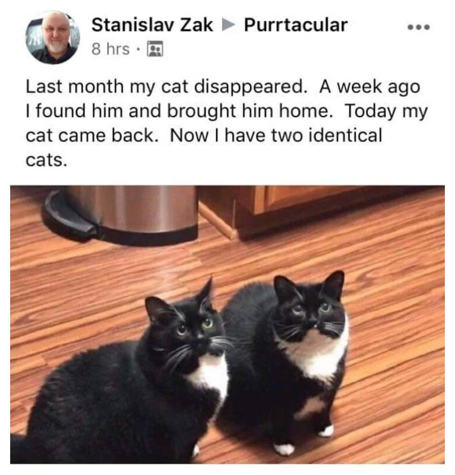 photo of identical cats captioned: last month my cat disappeared. A week ago I found him and brought him home. Today my cat came back. Now I have two identical cats