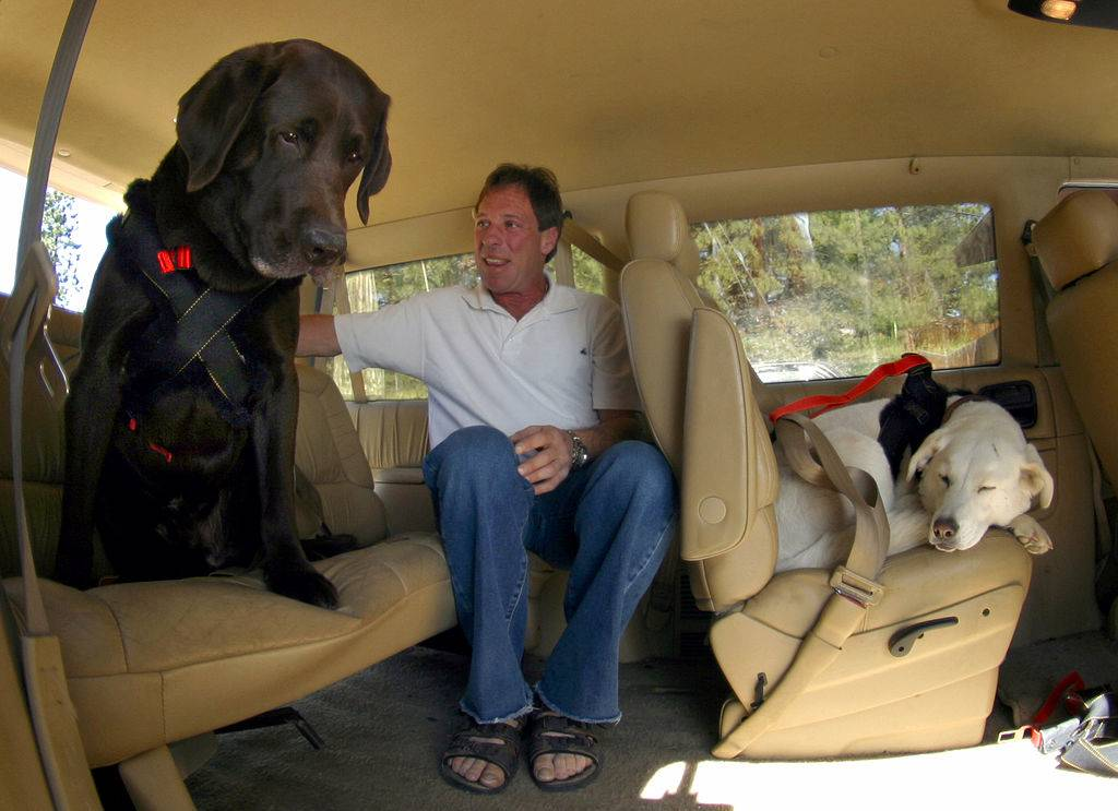 man sitting in backseat of his mini-van with two dogs in car restraints