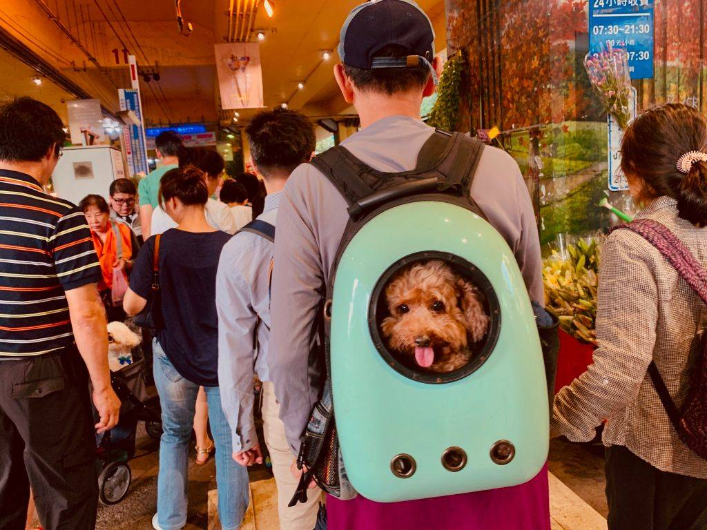 a man with a small dog inside a backpack