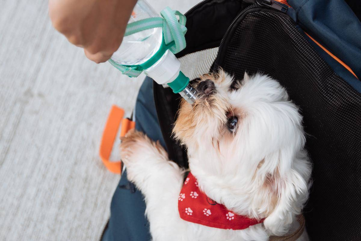 a small dog drinking water out of a bottle
