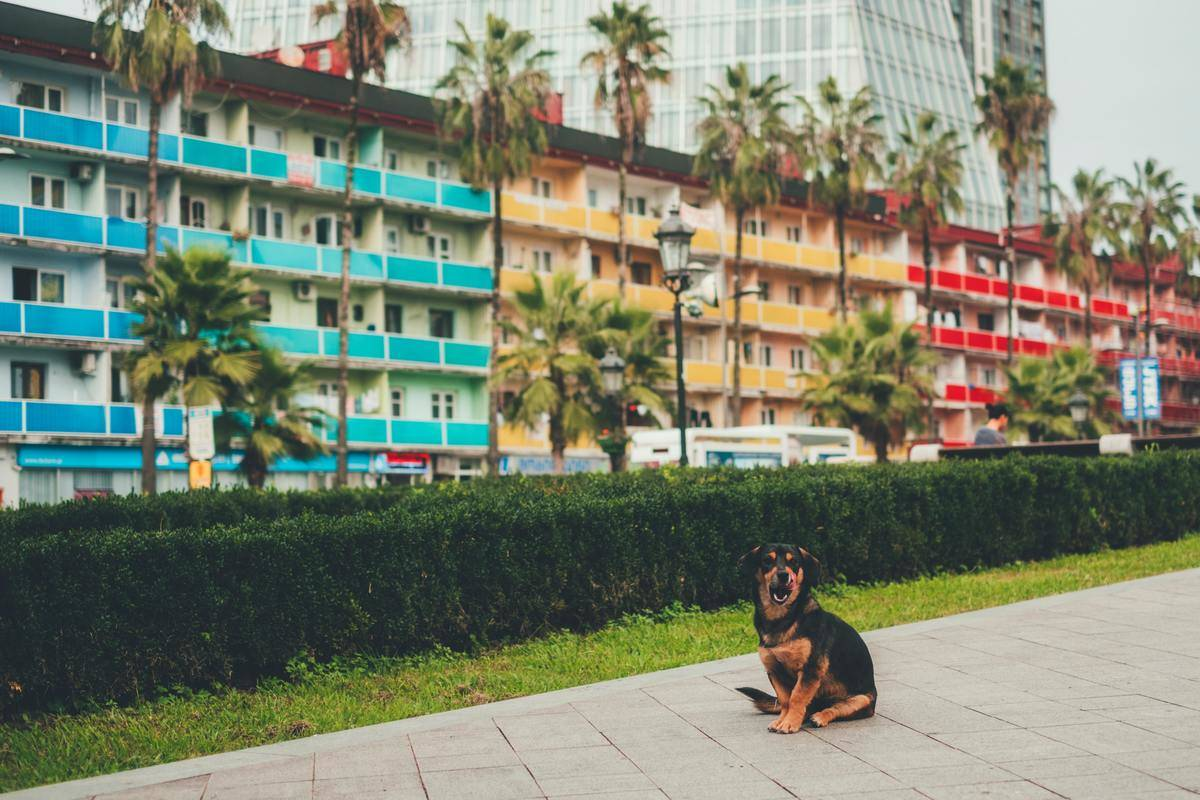 a small dog in front of a multi-colored hotel with palm trees