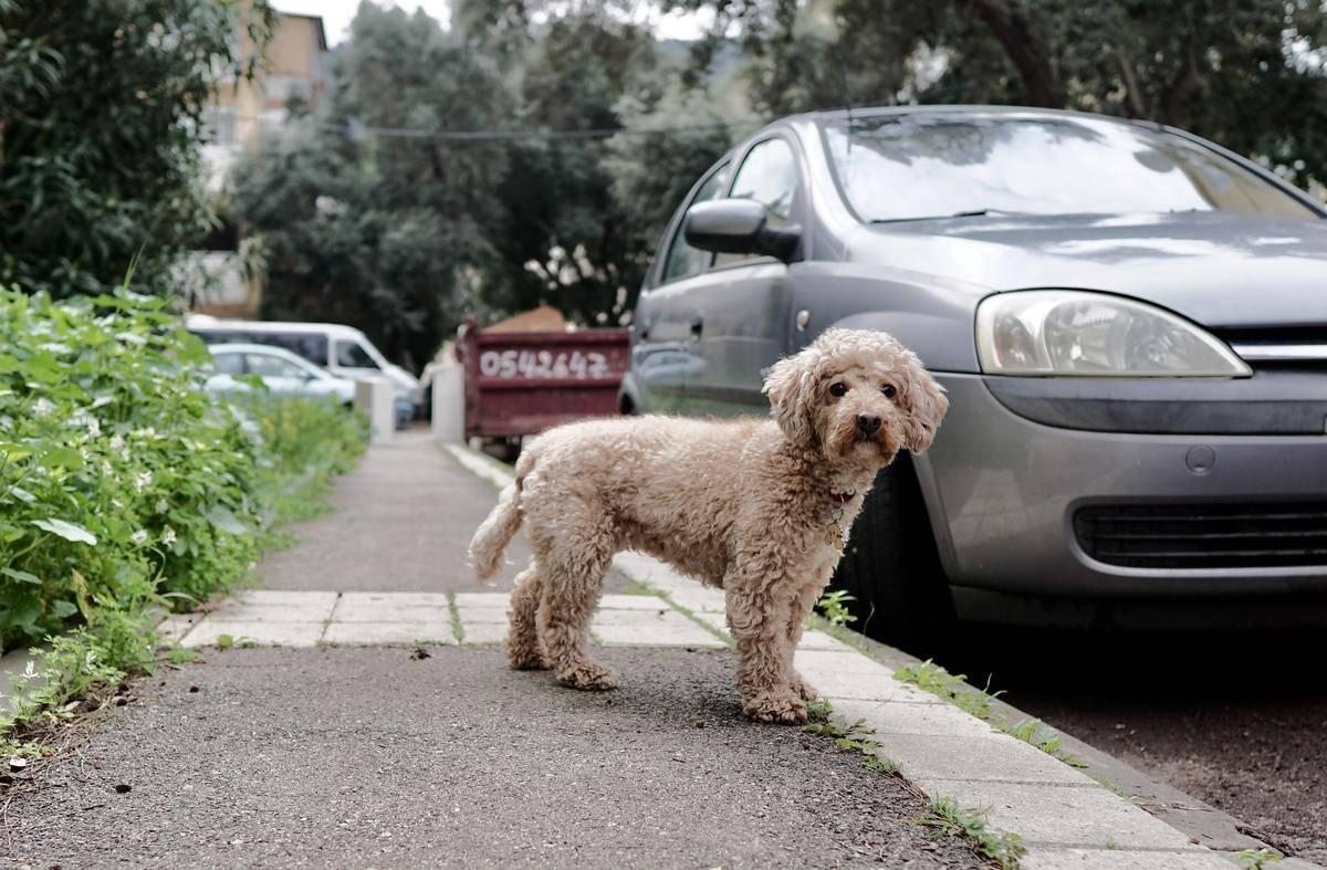 a dog outside of a car on the sidewalk