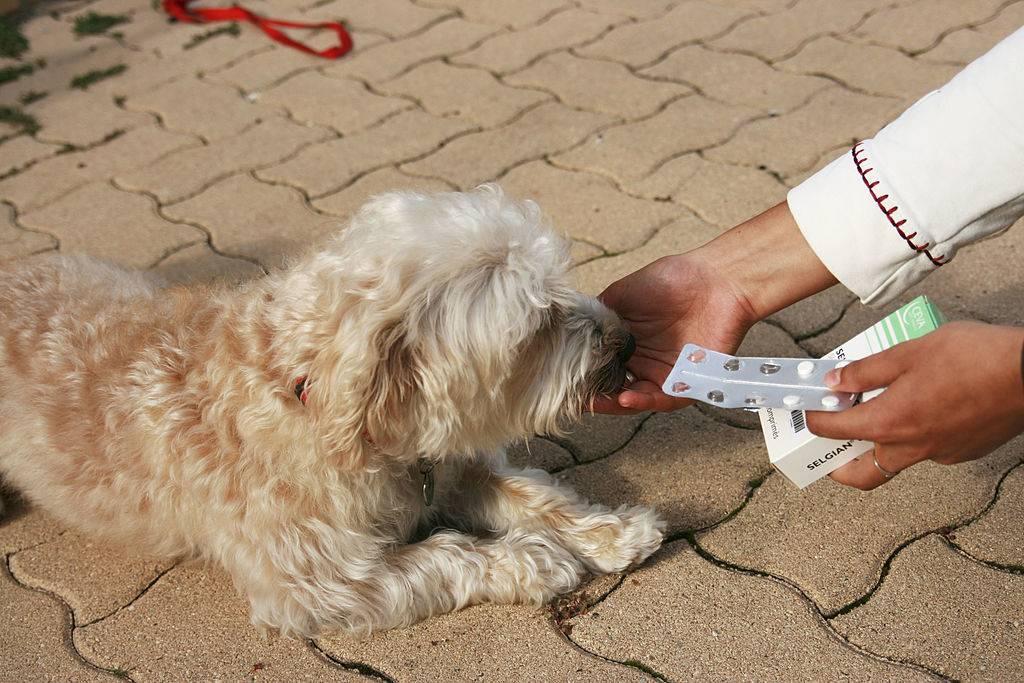 someone feeding a dog a pill