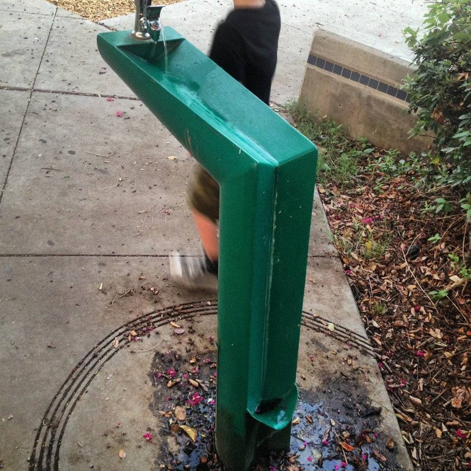 water fountain with a catch for dogs as well