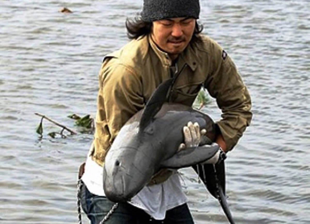 Porpoise-Saved-from-Rice-Field-After-Flood-17982-71456